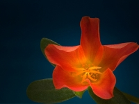 bloem29x800