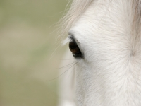 paard03
