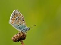 vlinders_007